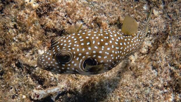 Изобилие ядовитых рыб фугу у берегов Антальи напугало жителей города