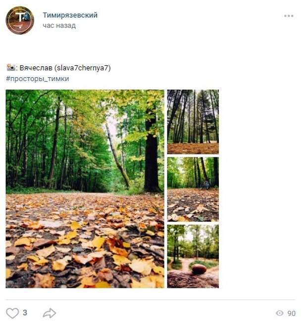 Фото дня: осенний Тимирязевский лес в объективе