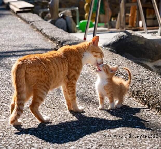 20 трогательных и смешных фото, которые доказывают, что животные - хорошие родители