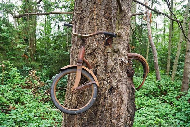 Что на самом деле произошло с велосипедом, вросшим в дерево