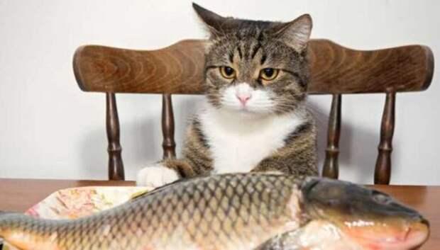 «Вы продоете рыбов»: история самого милого мема этоголета