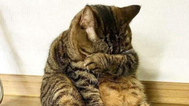 Приют для кошек вОренбурге вновь подал сигнал бедствия