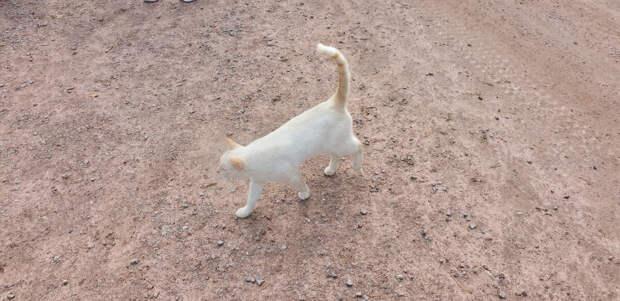 Коты на острове Валаам