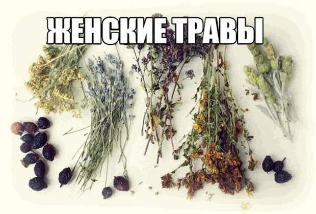 ЖЕНСКИЕ ТРАВЫ.