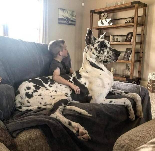 19 фото животных, показывающих, что доверие и любовь к человеку поистине бесконечны