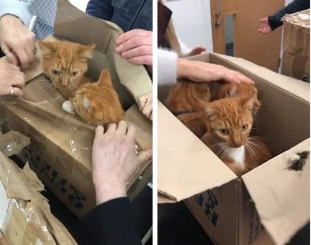 Спасение 11 рыжих котов, засунутых в маленькие картонные коробки