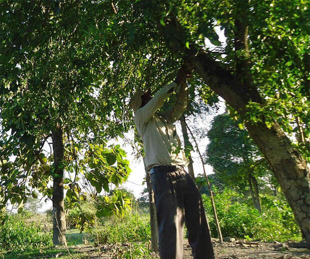 С 16 лет этот человек высаживает по дереву в день на исчезающем острове