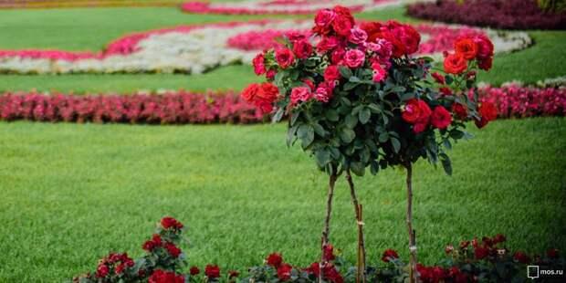 Во время покоса травы на Ленинградке цветы не пострадали