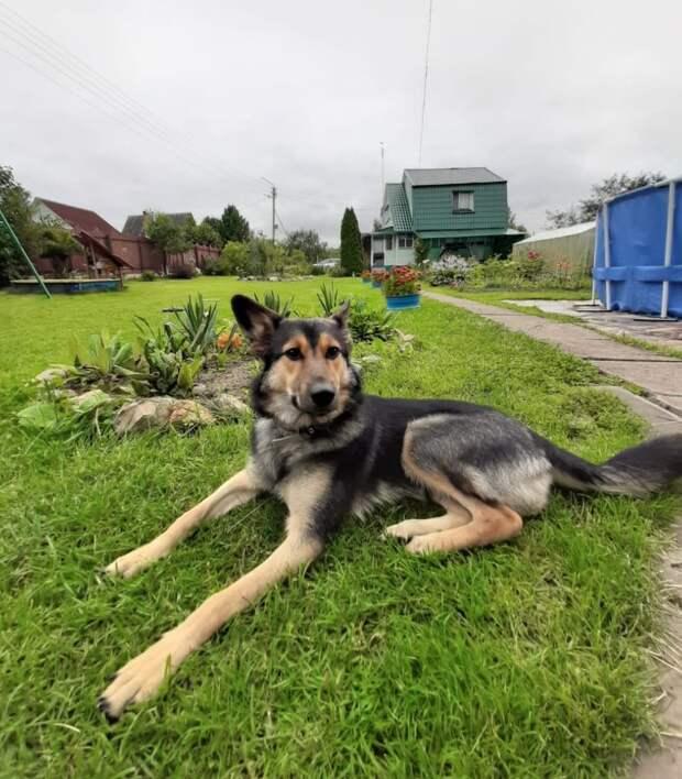 Еще недавно испуганная собака была домашней, а потом сидела на улице, дрожа от страха и неизвестности