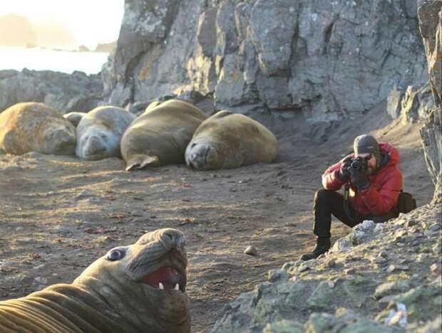 Как живут ученые-полярники в Арктике и Антарктике? 8 классных фото