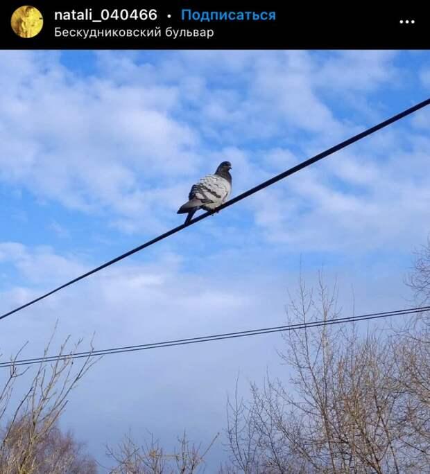 Фото дня: Бескудниковский наблюдатель