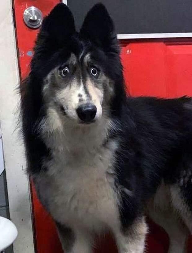 «Её никто не купит!» — говорил хозяин, отдавая особенную собаку в приют