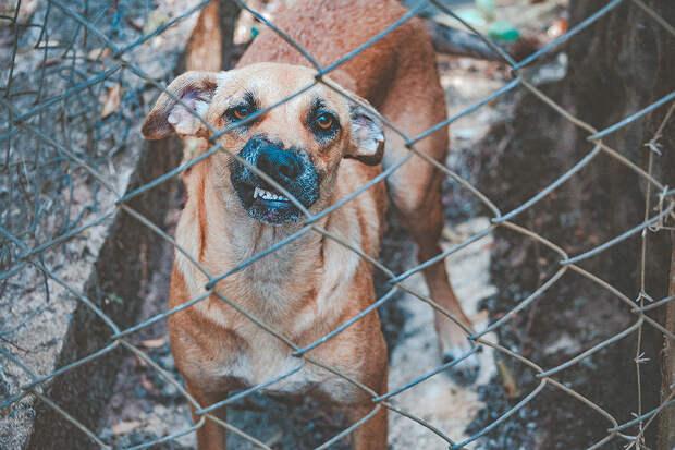 Депутаты Госдумы предложили усыплять бездомных животных