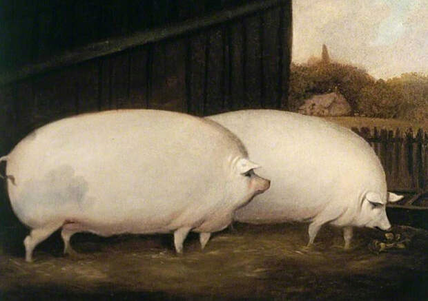 Навстречу году свиньи