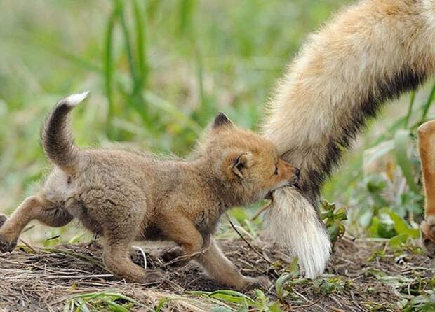 Как мило! 10+ детенышей животных, которые недадут вам грустить