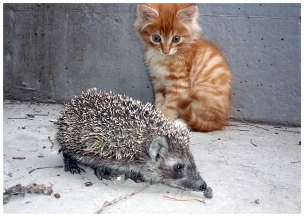 Жили у нас кот и ежик. В общем, была у них общая чашка из-за которой они постоянно воевали