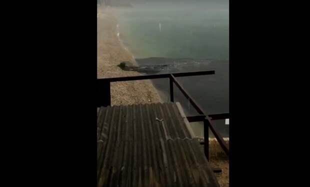 Блогер показал выброс фекалий в море в Коктебеле