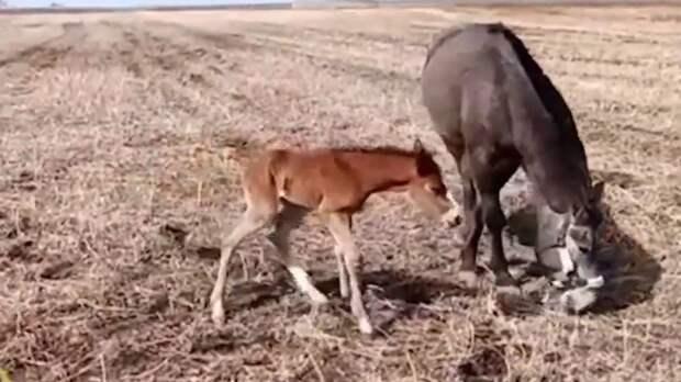 Амурские пожарные спасли новорожденного жеребенка от гибели в канаве