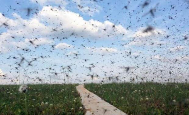 Никакие фумигаторы не помогут: жители Воронежской области спасаются от нашествия миллиардов комаров