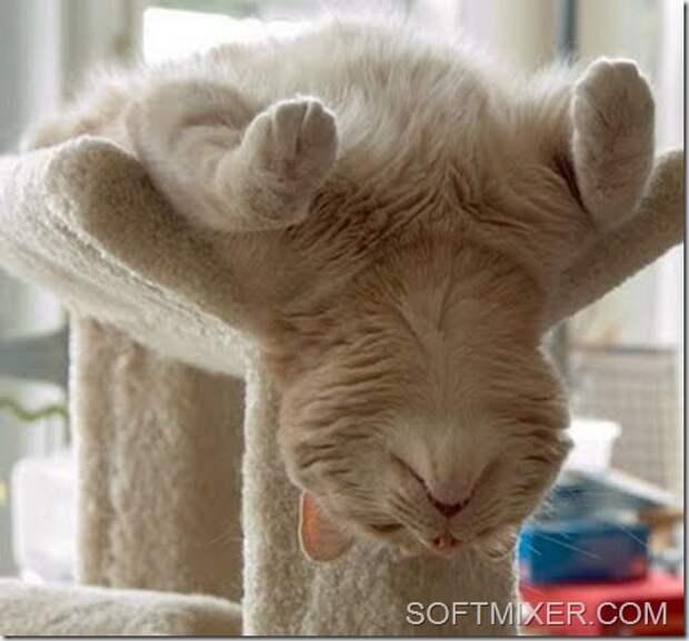 Крепкий сон – залог здоровья!