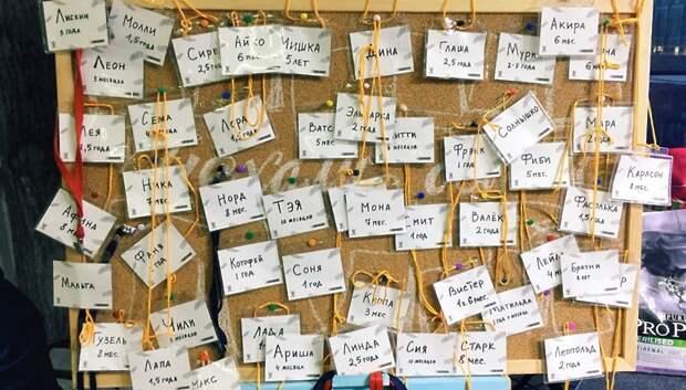 55 животных из центра реабилитации «Юна» нашли хозяев в ходе выставки
