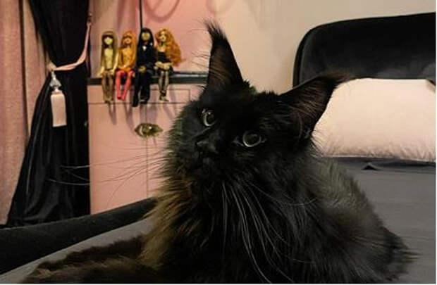 Алена Водонаева решила купить квартиру для кота