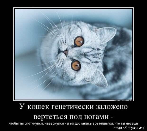 1372745855_novye-demki-1 (500x444, 100Kb)