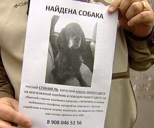 Челябинский полицейский спас из-под колес авто породистого пса
