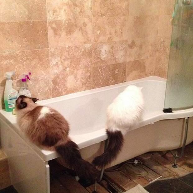 5. Возникло желание принять ванну? Давай, до свидания домашний питомец, животные, кот, милота, юмор