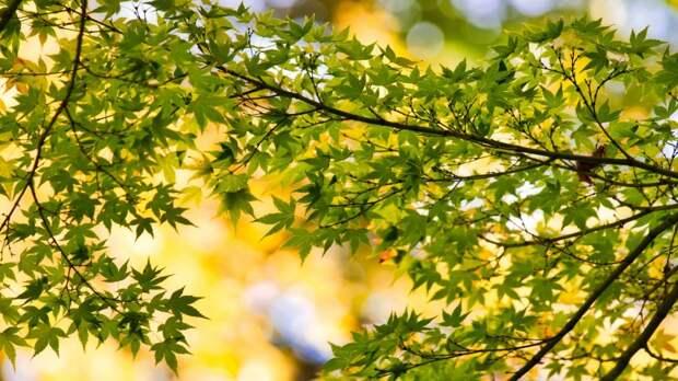 Решение о спиле дерева на улице Коккинаки примет департамент природопользования