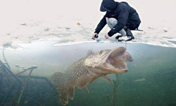 Камера погрузилась под воду Чернобыльской реки