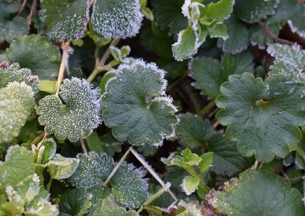 20 мая в Удмуртии ожидаются заморозки