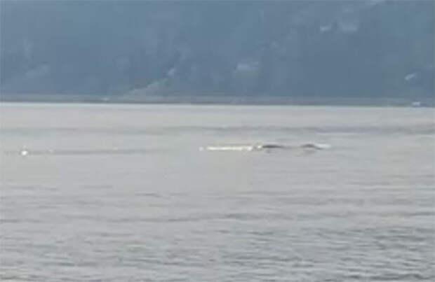 Кадр из видео, снятого Халбауером