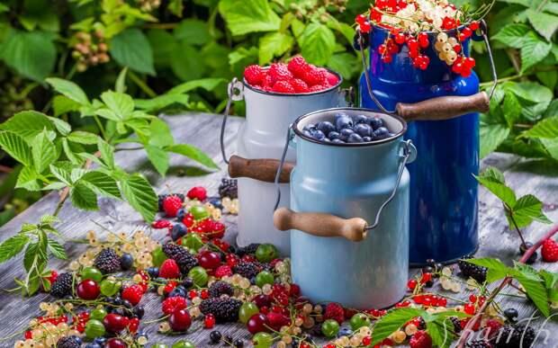 Все лето дочка пасется в нашем ягодном саду