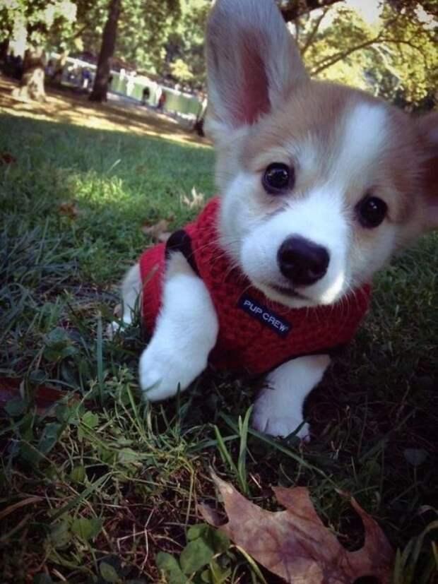 22. Маленькое чудо животные, настроение, очарование, подборка, собака, фотография, щенок
