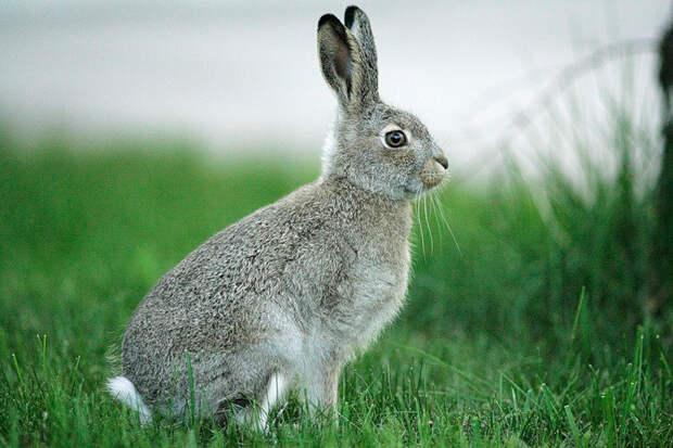 http://www.animalsglobe.ru/wp-content/uploads/2011/10/krolik.jpg
