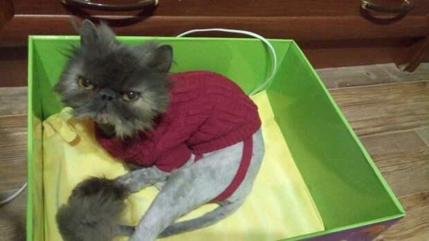 Персидская кошка пряталась в котельной, но рабочие гнали ее оттуда перс, персидская кошка, порода, приют, экзот