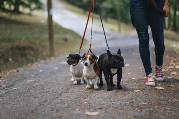 Гулять минимум два часа: «Собачий акт» вГермании ужесточит правила для владельцев собак
