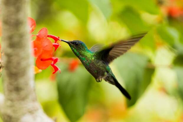 Исследование: ученые обнаружили, что самки колибри меняют окрас оперения на яркий, как у самцов