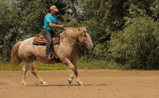 «Конный биатлон» проведут в Удмуртии