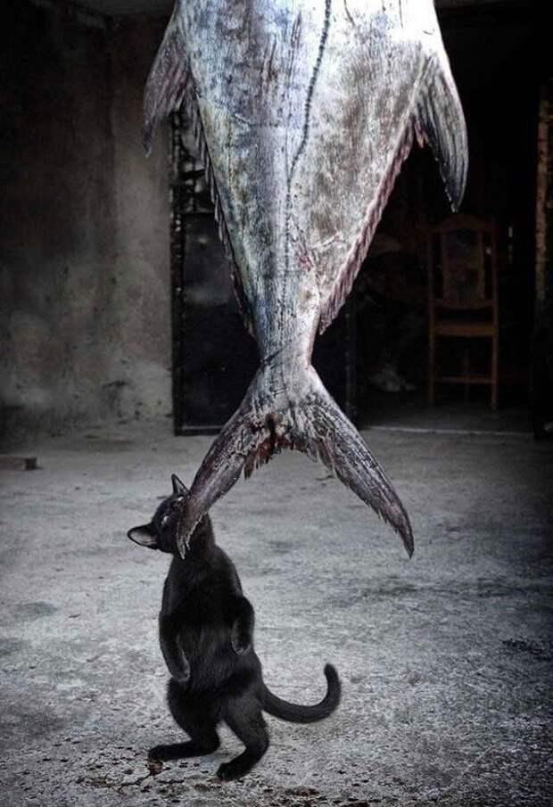 Коты - воришки