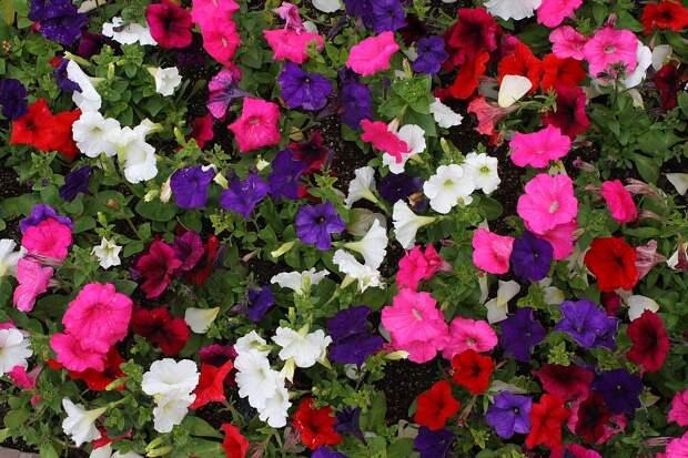 Уголок отдыха, утопающий в цветах