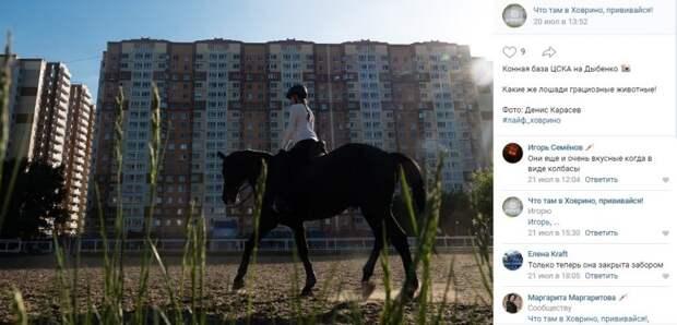 Фото дня: конная прогулка по Дыбенко