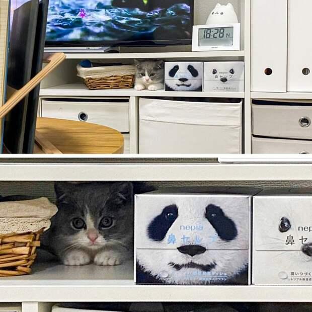 Ситуации, которые поймут только владельцы кошек