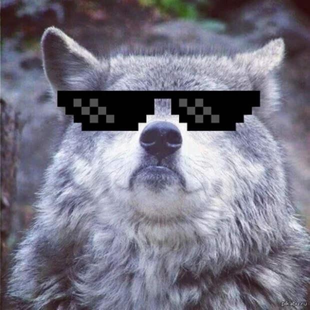 Волк Петя и задача с продолжением... Занимательная математика, Диета, Волк, Задача, Длиннопост