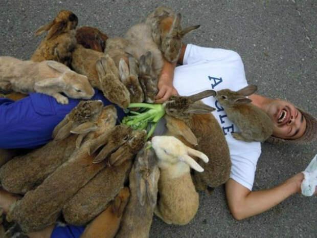 Эти несносные кролики. | Фото: Смешные фото приколы.