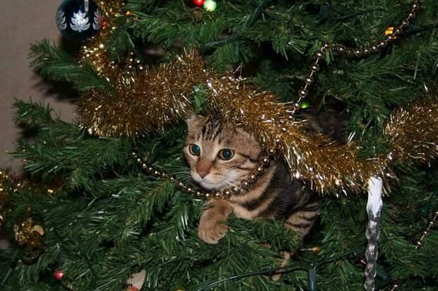 Новогодняя головоломка: как уберечь елку от животных