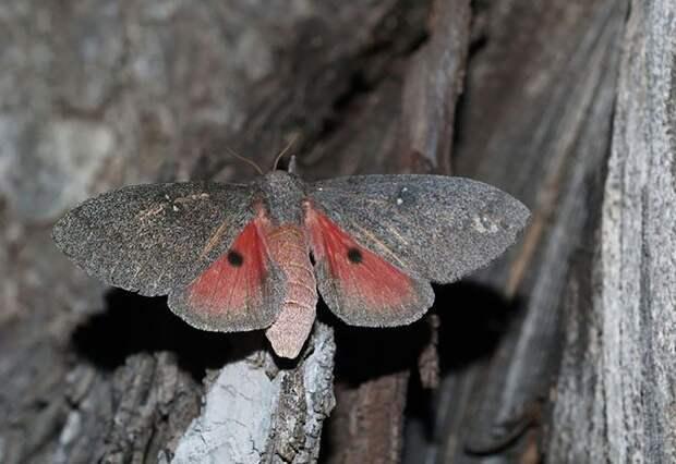 Как гусеница превращается в бабочку