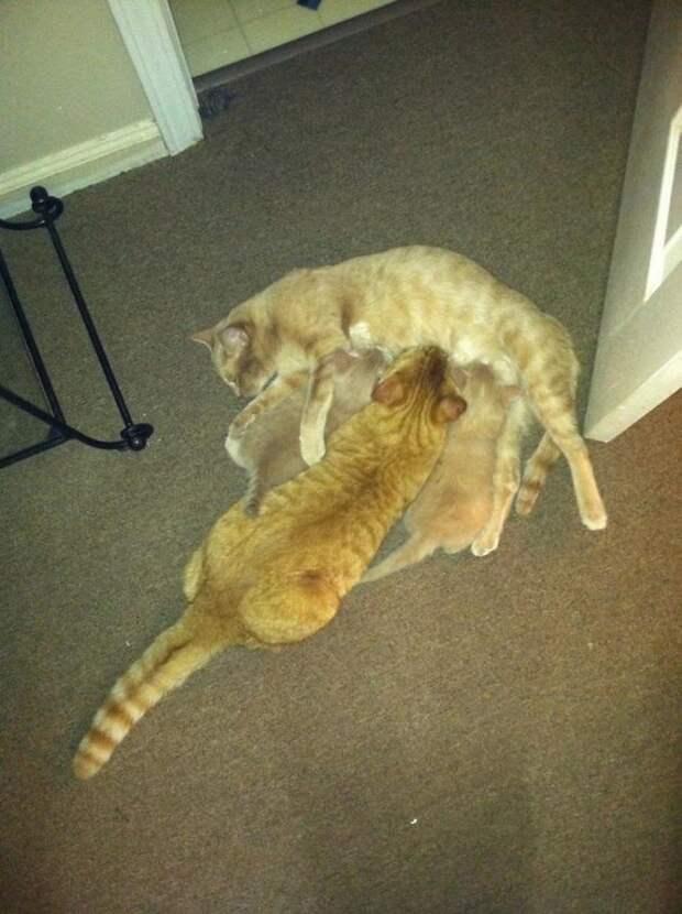 Номинанты на звание самого бестолкового кота года бестолкового, года, кота, кошка, на звание, номинанты, самого