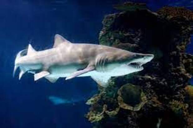 В США 12-летний мальчик словил акулу во время рыбалки на пляже (ФОТО)